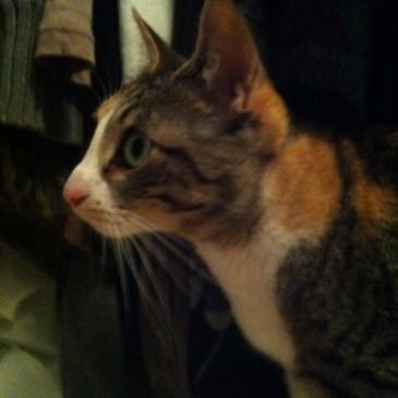 Katze im Wandschrank