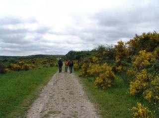 Naturpark Eifel - Wollseifen